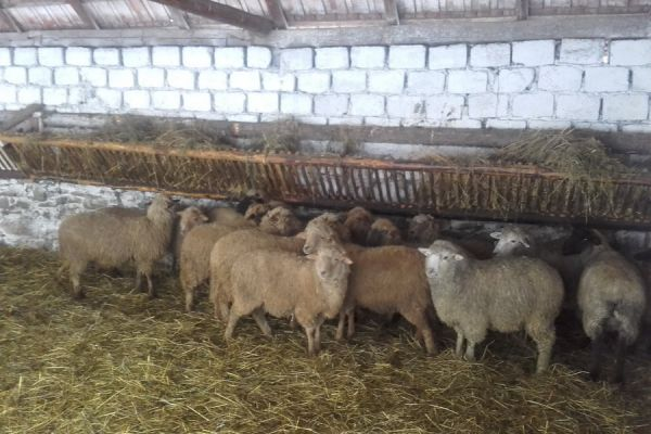 oltszemi-farm-453EEFA2B-5FA6-361E-1C0E-2D78624D9F64.jpg