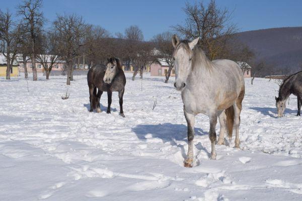 oltszemi-lovas-farm-0218249F63-5637-9268-578B-D252D994F651.jpg