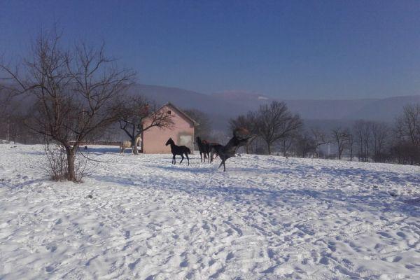 oltszemi-lovas-farm-11B784C1C6-9966-9900-D9B0-22E4F6709F36.jpg