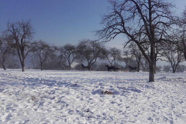 oltszemi-lovas-farm-13A0085459-1677-A9A3-DEA6-915FA7B4A8E7.jpg