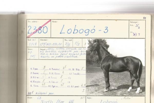 2380-lobogo-3-001C92C8618-648B-75F7-B88D-B01E00045A55.png