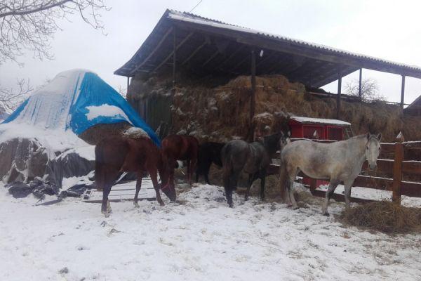 oltszemi-farm-89D48444B-E0EF-7B75-FE36-1A64B7A0B33A.jpg