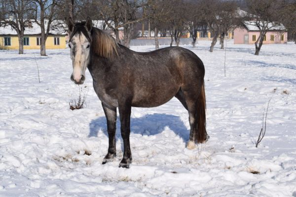oltszemi-lovas-farm-07E9A665FF-3476-FFFD-3B97-24EF6391CF7D.jpg