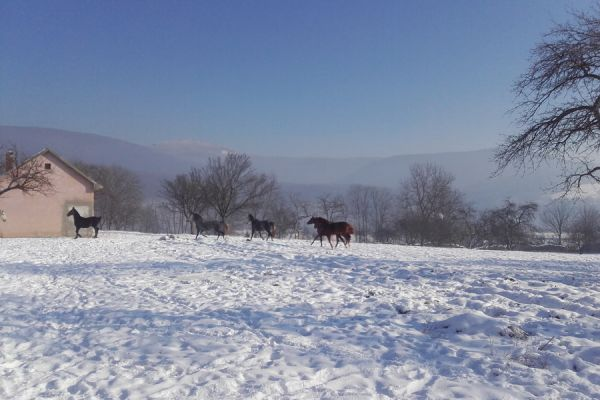oltszemi-lovas-farm-1089813A46-3289-2C9B-0B2C-B3690BFBA829.jpg