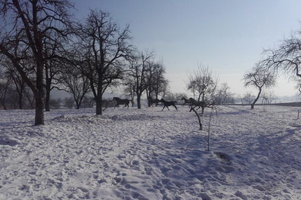oltszemi-lovas-farm-14D7FBF9B4-66B7-6C4A-DC2C-DC51F645916A.jpg